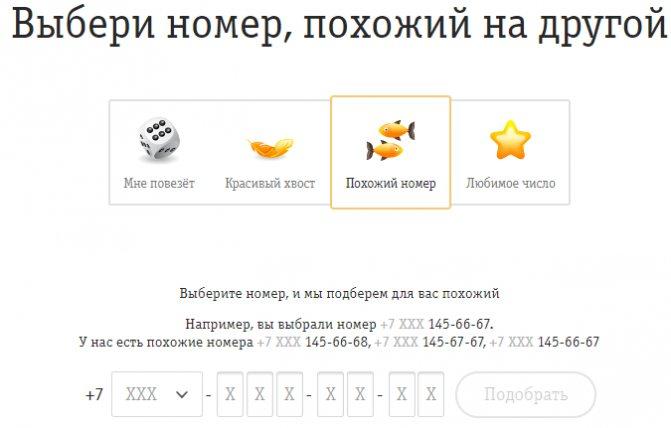 nomer-vybor8.jpg