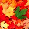 kartinka_osen_71_20120825_1041558480.jpg