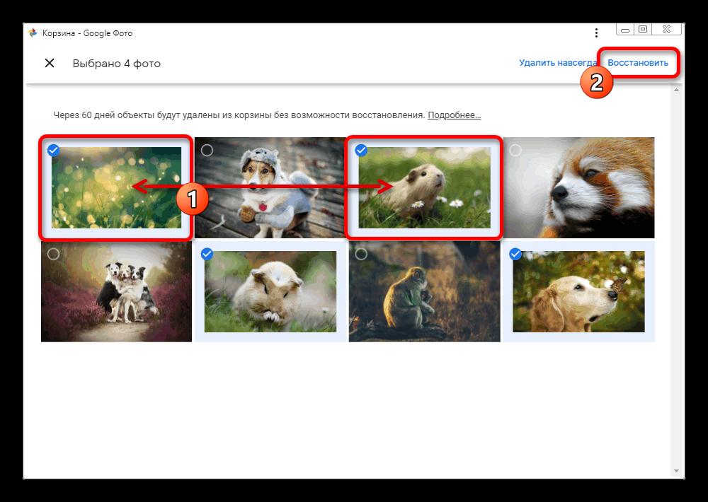 proczess-vydeleniya-izobrazhenij-v-korzine-na-sajte-servisa-google-foto.png